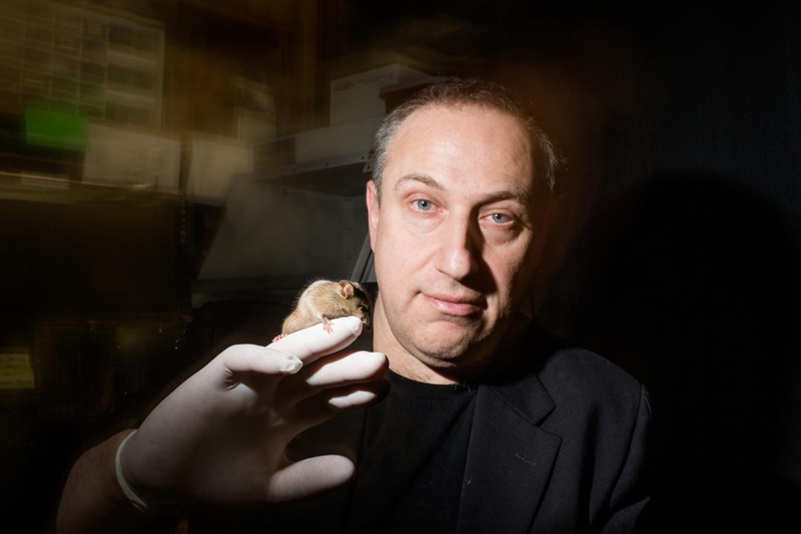 Transgenic mice developed by a team led byHunter professorPaul Feinsteincan be tuned to have different levels of sensitivity to any smell