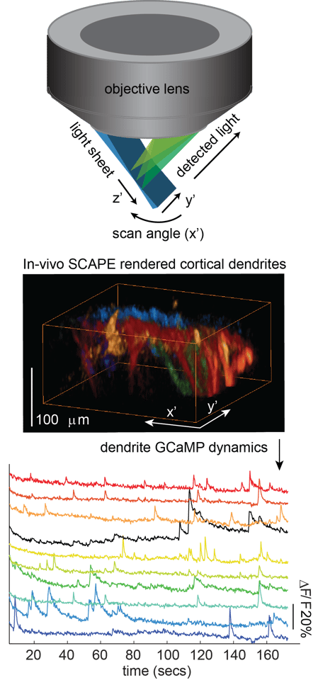 The new imaging technique that permits large-scale detection of neuronal firing in three-dimensional brain tissue (Photo: CUMC)