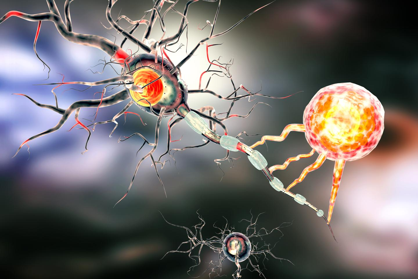 Scientists have made a key discovery around how cancer stem cells can give rise to recurring brain tumors