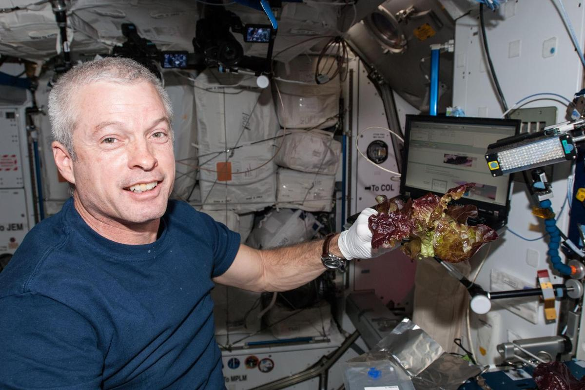 Astronaut Steve Swanson harvests some of the crop in June 2014