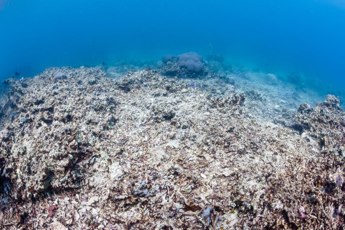 Edinburgh study finds evidence that ocean acidification was to blame for the Permian-Triassic Boundary extinction 252 million years ago (Photo: Shutterstock)