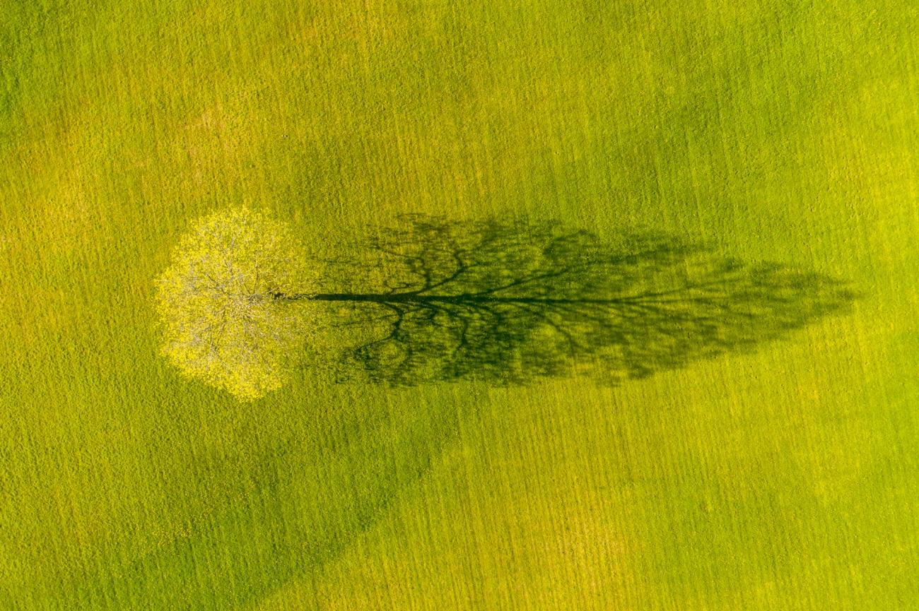 Commended - Nature. Spring Maple Tree Shadow. Weybridge, Vermont
