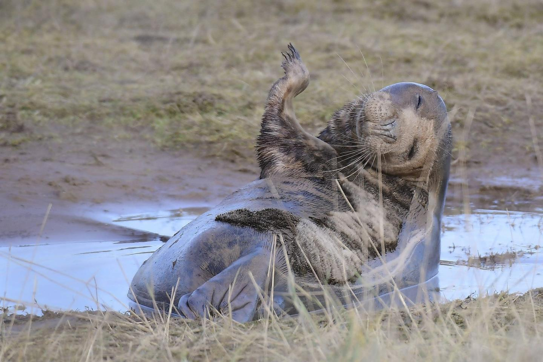 "Mammal Comedian Award, ""Grey Seal"""