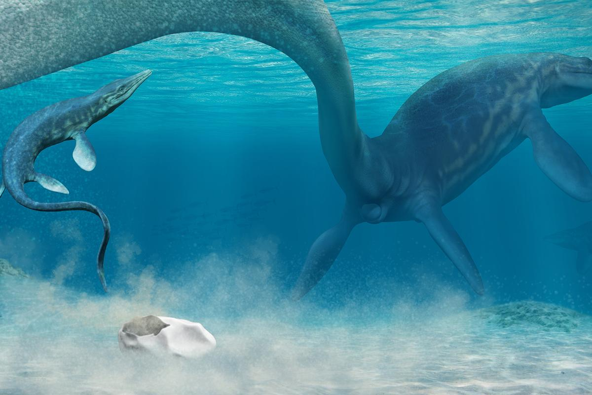 An artist's impression of a mosasaur laying a soft-shelled egg, with a hatchling born soon after