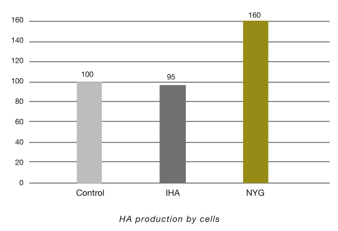 Chart showing Hyaluronic Acid production