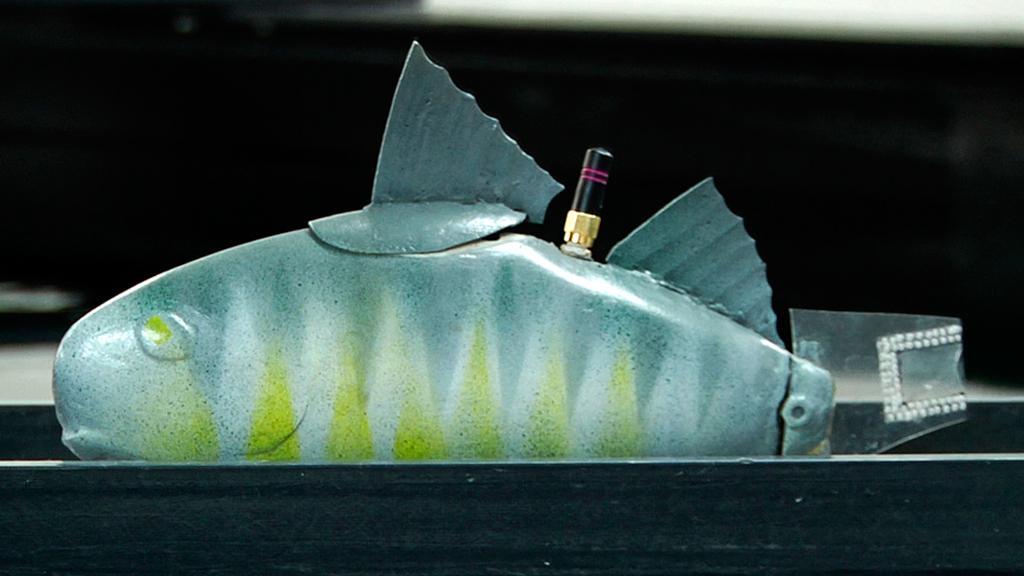 A robotic fish prototype developed in the MSU laboratory