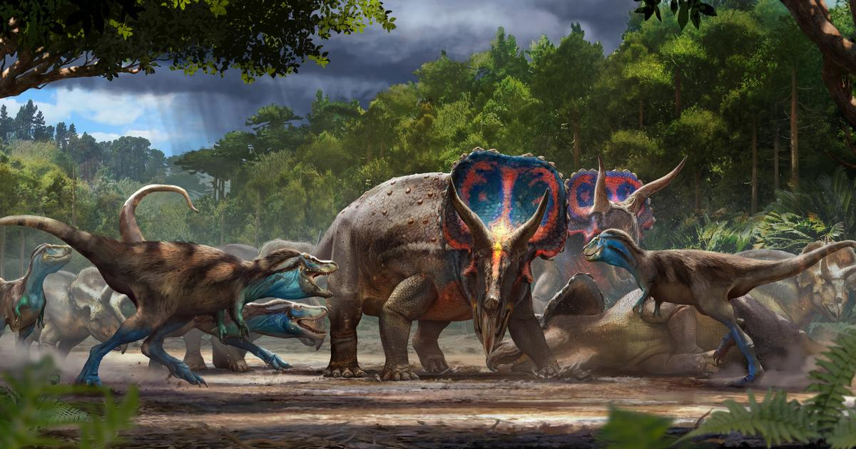 """Incredible """"Dueling Dinosaurs"""" to go on public display for the first time"""