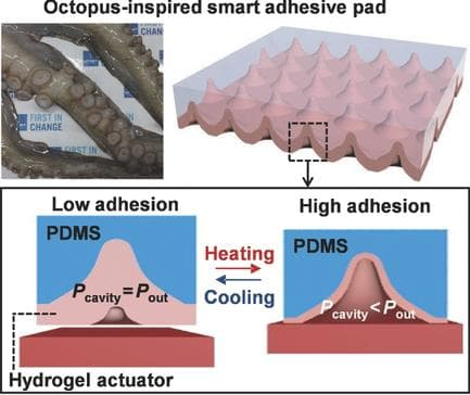 A diagram of the adhesive pad technology