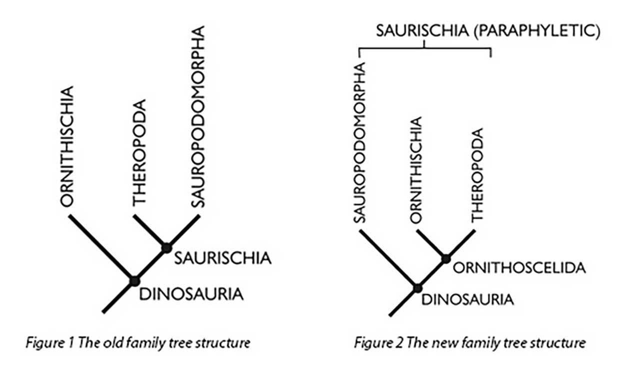 The old dinosaur family tree, left, has had a bit of a shuffle, thanks to new clues in fossils
