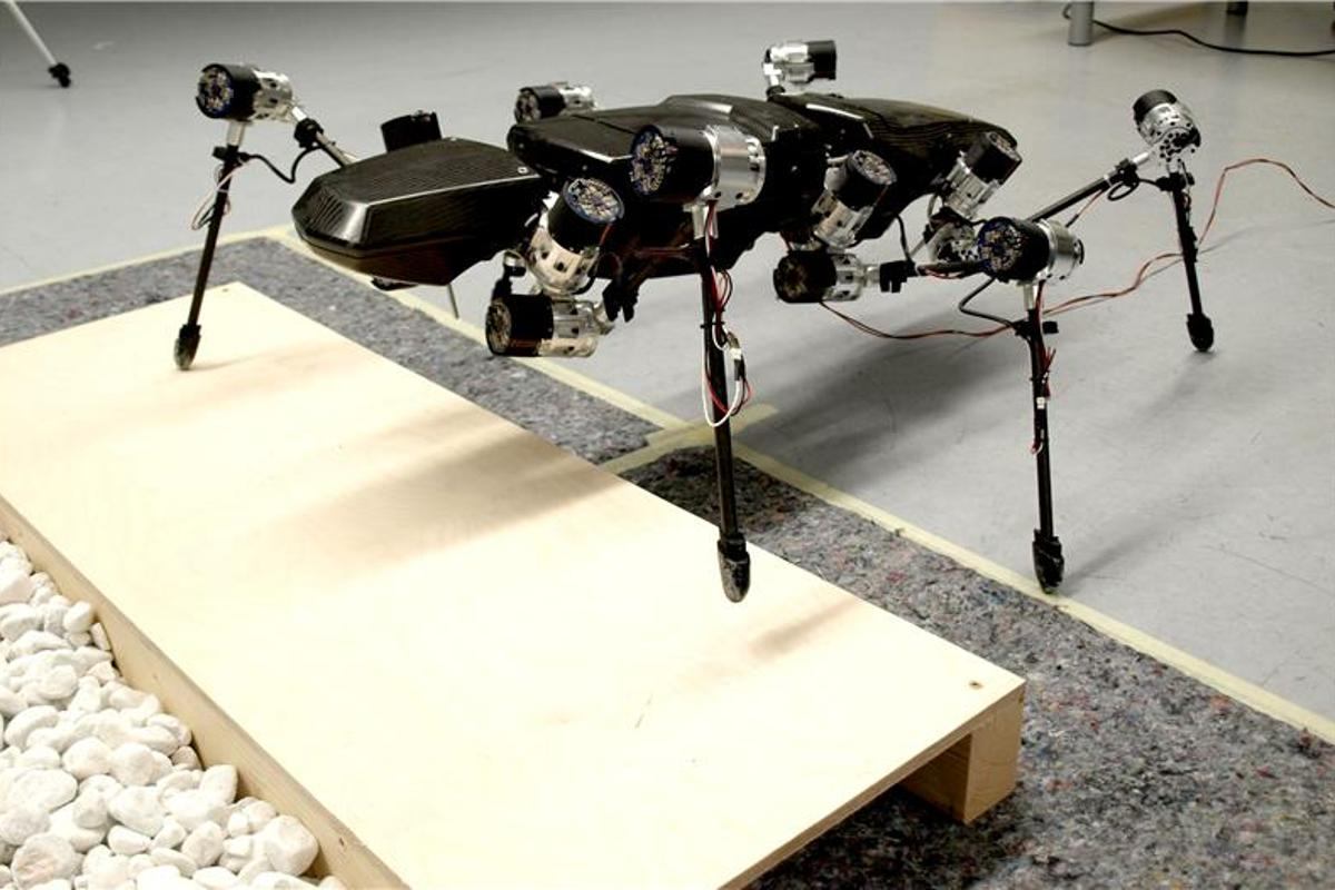 Hector the stick insect-inspired robot traversing an obstacle course (Photo: Bielefeld University)