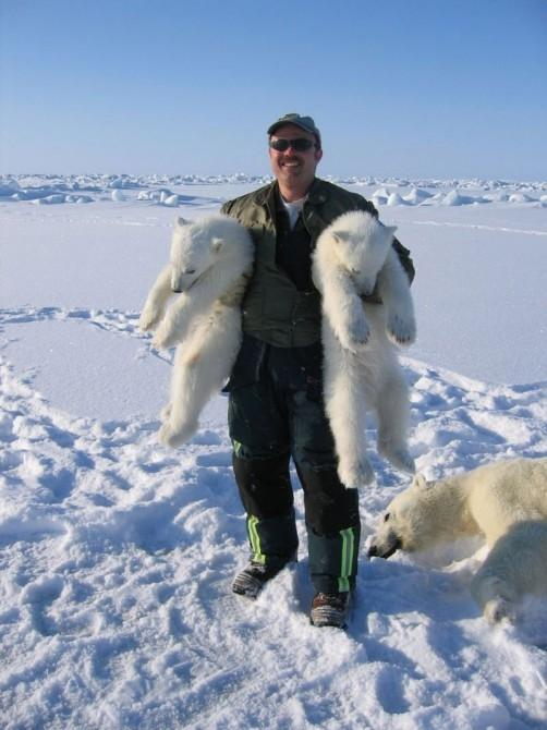 "BYU biologist Thomas S. Smith with Polar Bear cubs and their unconscious ""mother"" - ""If she were conscious, she'd be holding me,"" Smith said. Photo: Thomas S. Smith / BYU"
