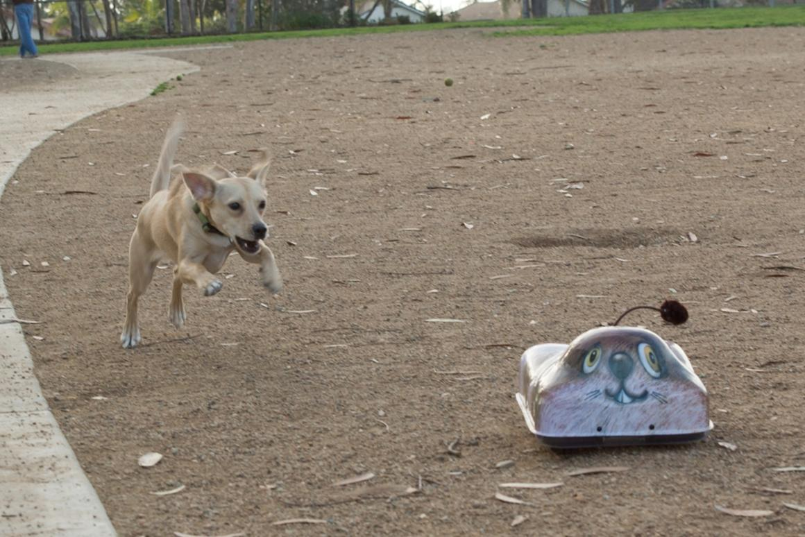Go-Go Dog Pals: Remote controlled toys for your dog to chase