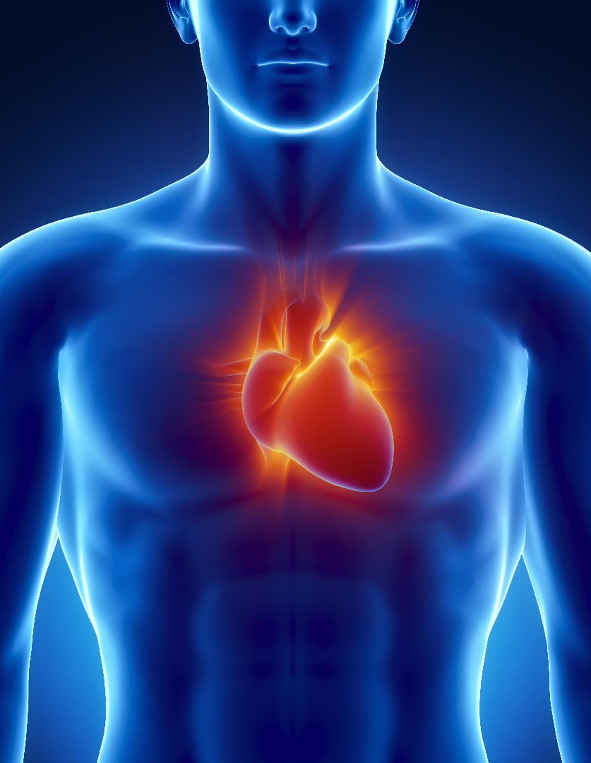 The exosomes from stem cells may be a useful tool in mitigating damage caused by heart attacks