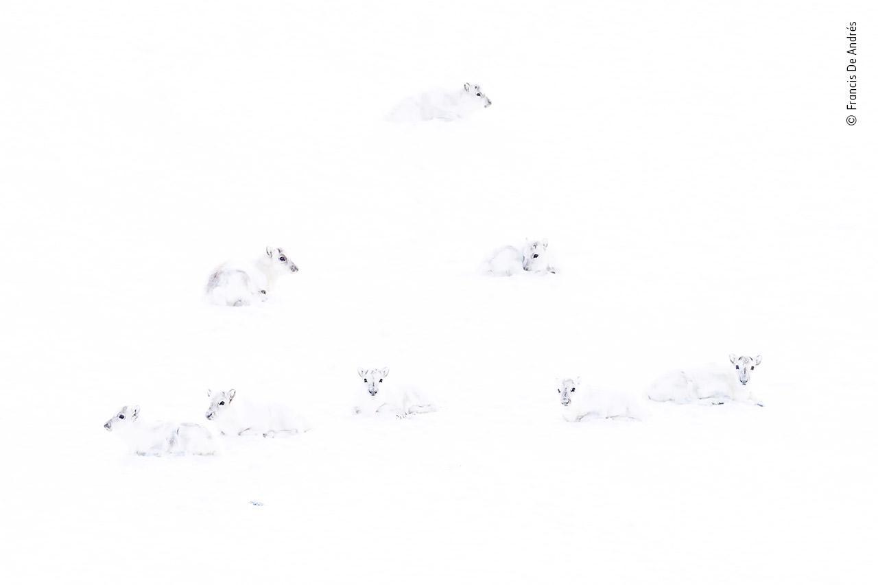 'Spot the reindeer'