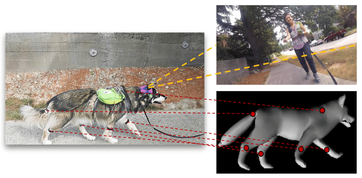 As well as video, the team recorded the dog's motions to help teach its AImodel