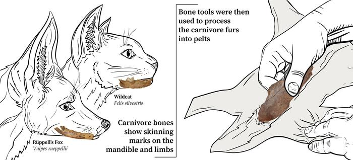 Carnivores were skinned for fur and bone tools were then used to prepare the furs into pelts