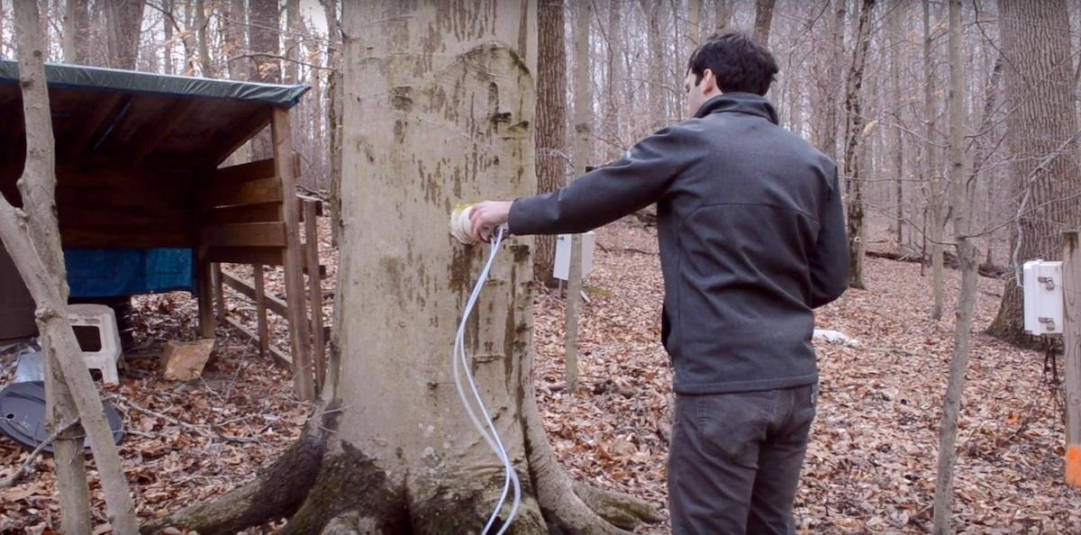 Daniel Warner tests tree trunks for their methane emissions