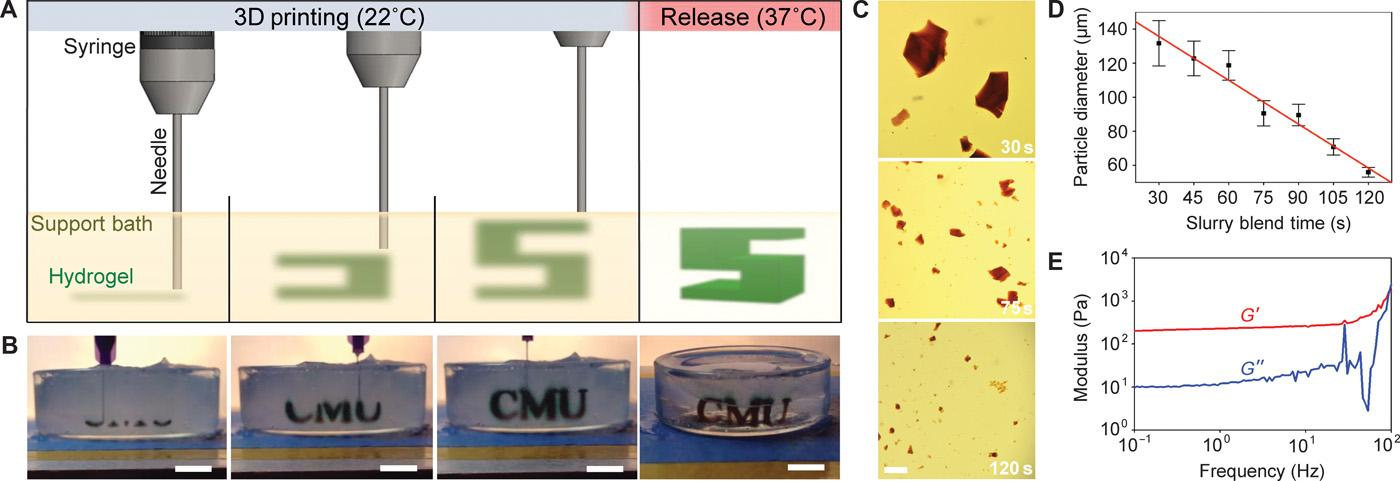 Diagrams show the process of injecting and releasing 3D-printed soft tissue (hydrogel)