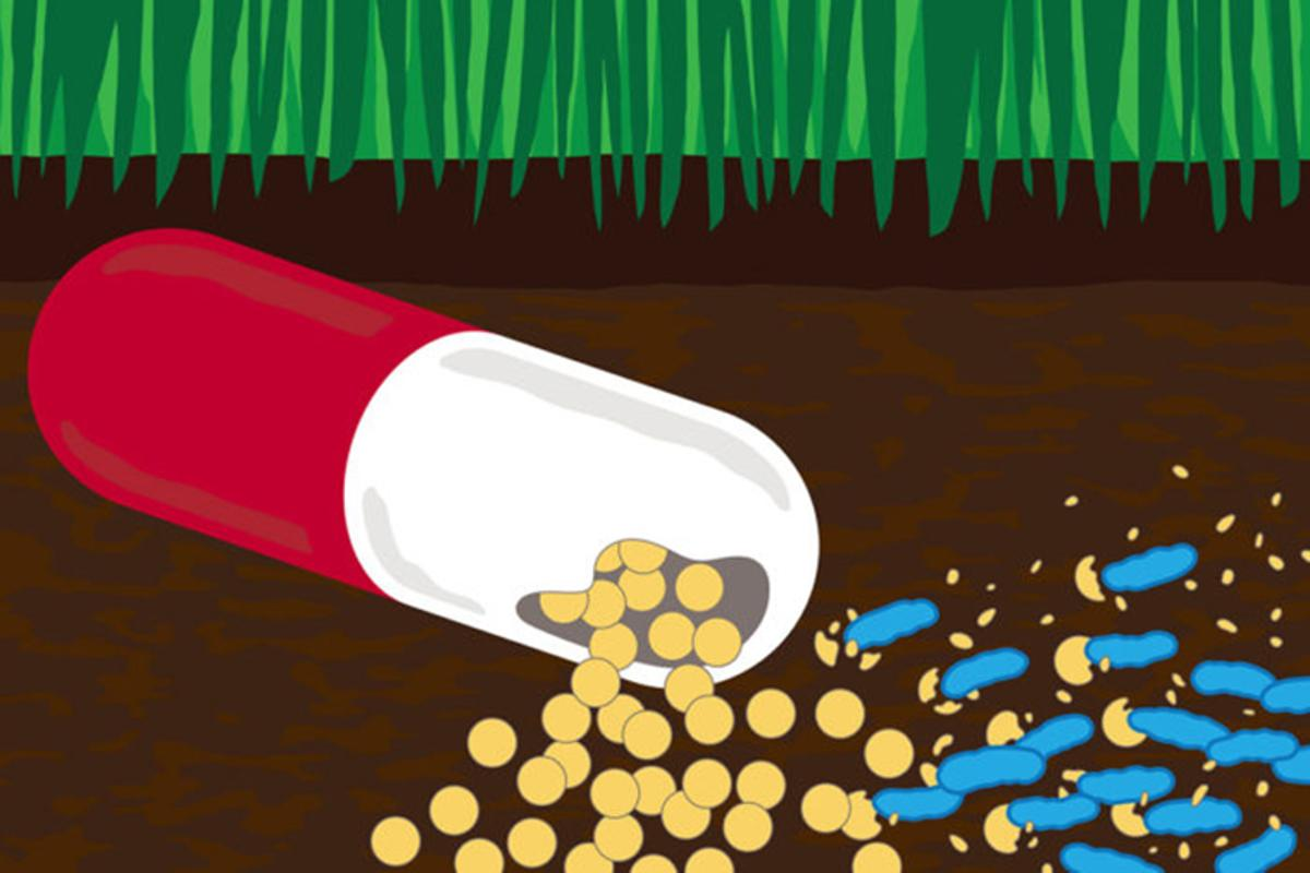 Antibiotics in agricultural and pharmaceutical waste are helping to turn bacteria in soil and water into drug-resistant superbugs – and some are now even eating antibiotics