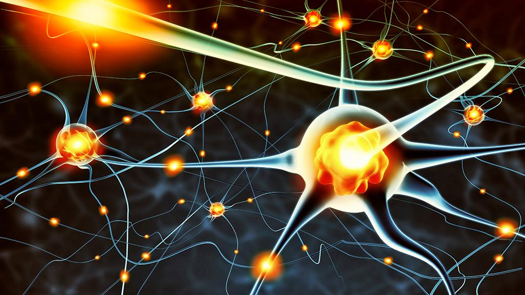 Researchers at Yale University have now found a molecular switch that can give an adult brain the plasticity of a young brain (Image: Shutterstock)