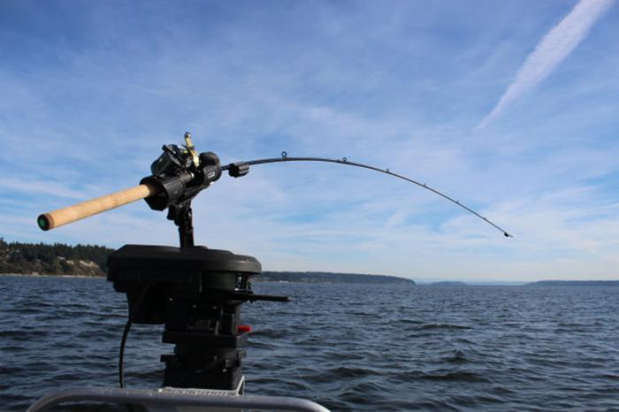 FishSentry's range of rods are fitted with sensors both at the tip and base