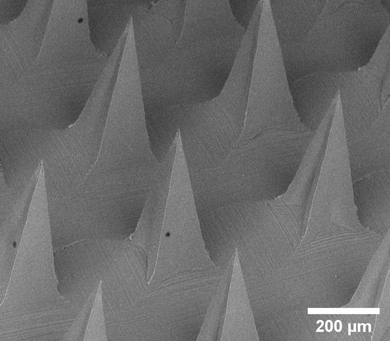 Each microneedle is just 0.2 mm wide at the base
