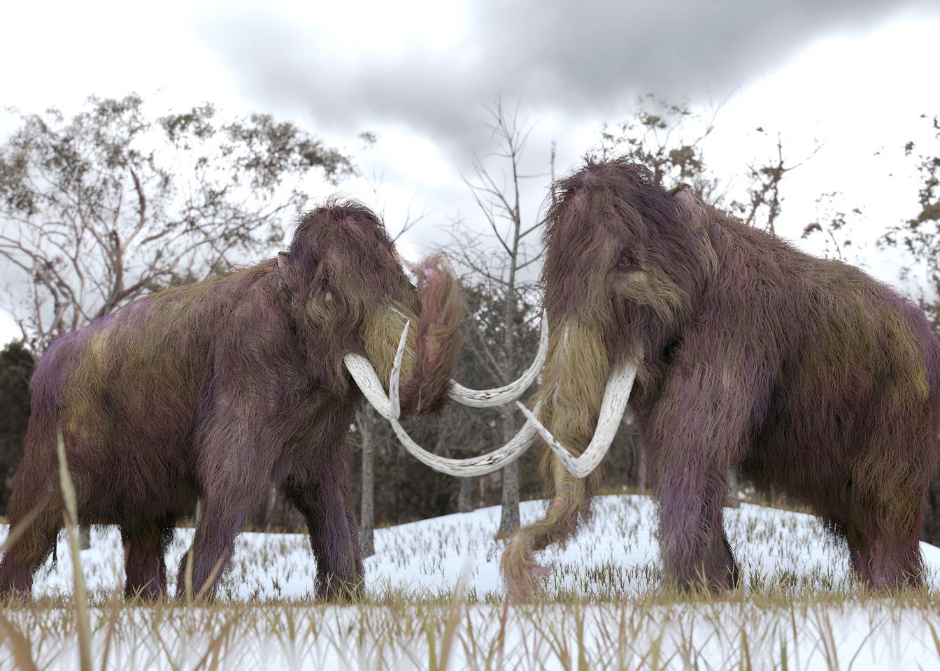 Resurrected Woolly Mammoth Genes Illustrate Genetic Decline