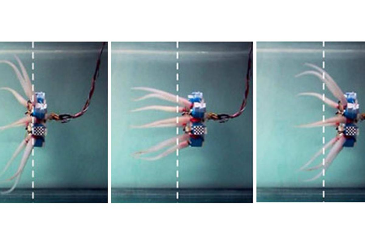 A prototype octopus robot uses its flexible tentacles to scull through the water