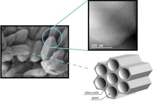 Some of the mesoporous silica particles (MSPs) used in the study
