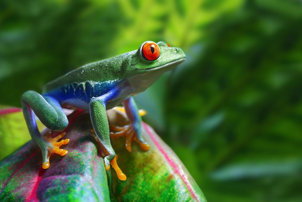 Map of Life is a new Google Maps-based website, which indicates the distribution of almost every species of vertebrate animal in the world (Photo: Shutterstock)