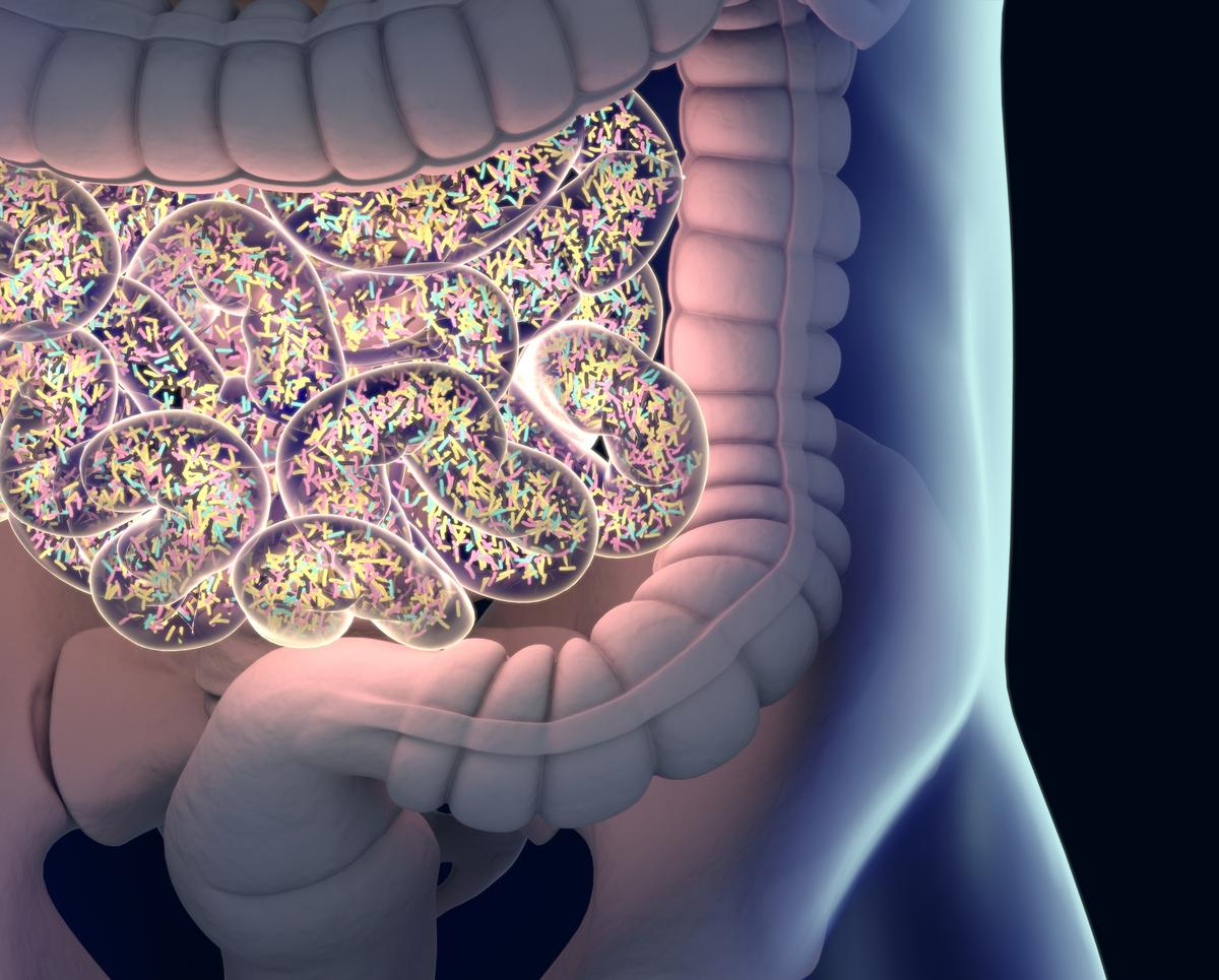 Researchers have found that administering good bacteria could help fend off infection by bad bugs