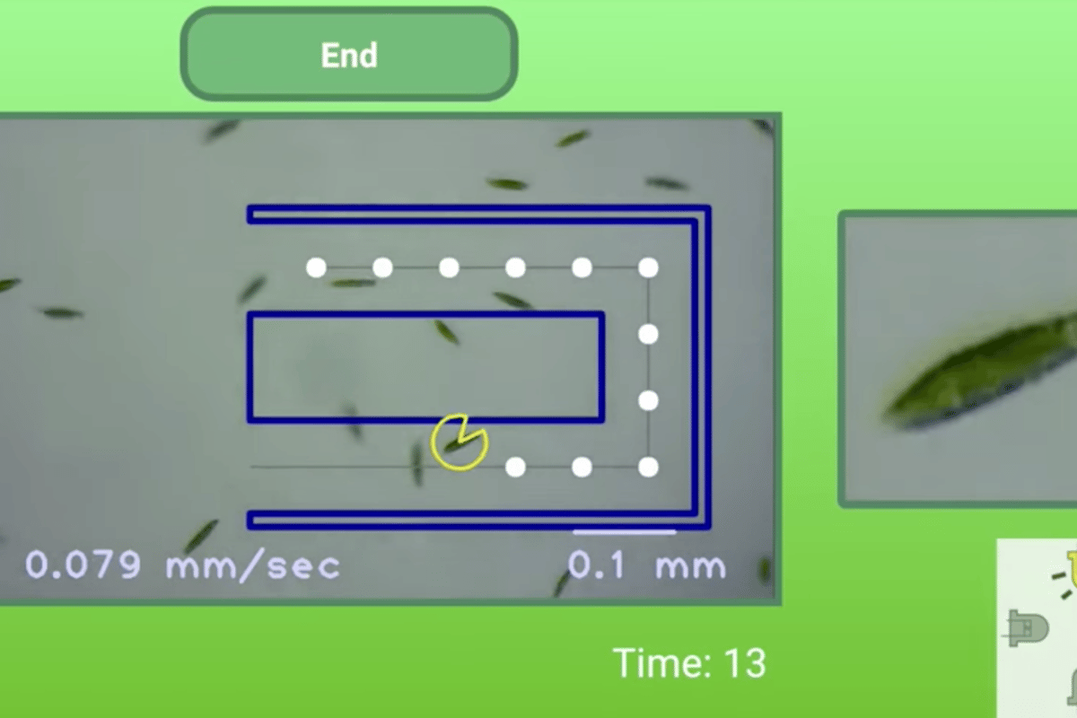 Researchers at Stanford University have created the LudusScope, which allows users to control microscopic organisms to play games like soccer and Pac-Man