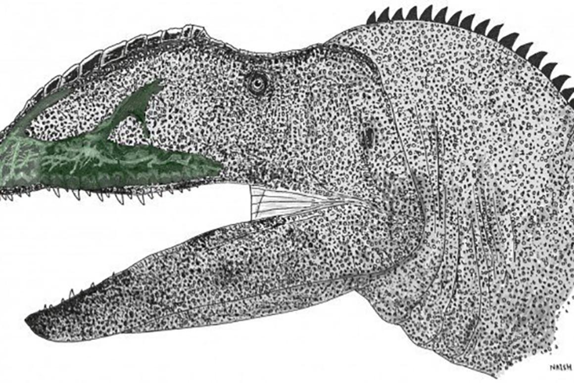Artist's impression ofNeovenator salerii,complete with is network of neurovascular canals