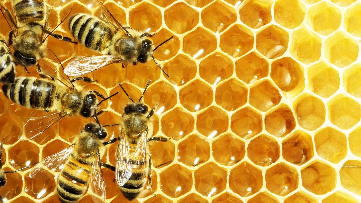 The latest potential weapon to join the armory comes from a substance used for thousands of years to fight infections – raw honey (Photo: Shutterstock)