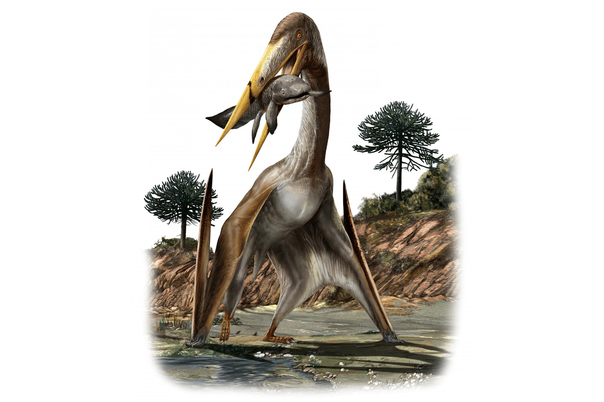 An illustration of a giant pterosaur