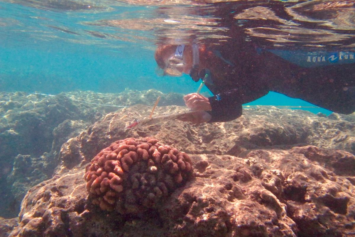Dr. Ku'ulei Rodgers conducting a coral bleaching survey