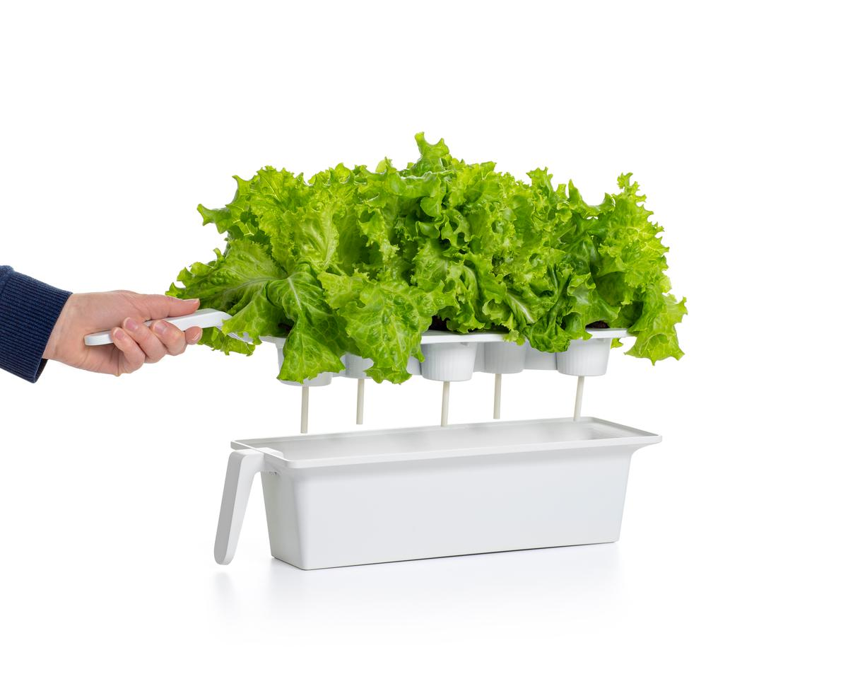 Proprietary pods provide all the nutrients needed by the growing plants, while the system automatically takes care of lighting and watering needs