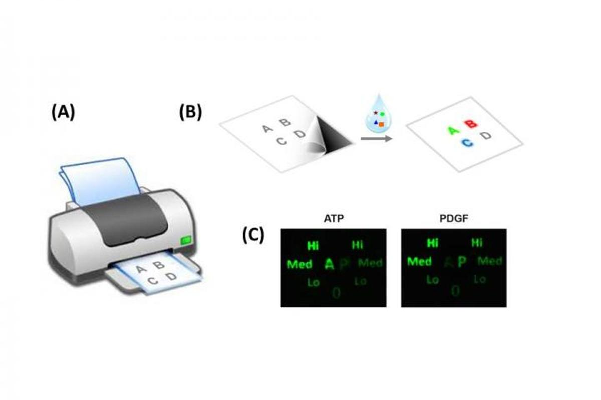 Ordinary inkjet printers can be given a special cartridge containing DNA-based bio-ink that produces paper sensors patterned after the codenames of pathogens (Image: McMaster University)