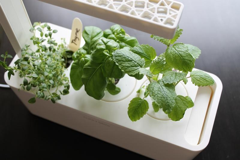 Click and Grow's Smart Herb Garden aims to help people grow herbs at home with a minimum of effort