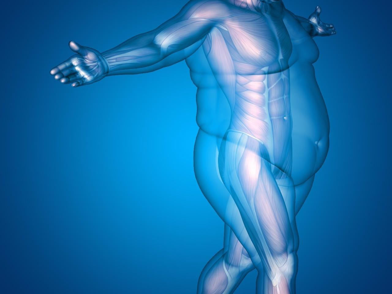 Scientists have zeroed in on the nerves that drive fat breakdown