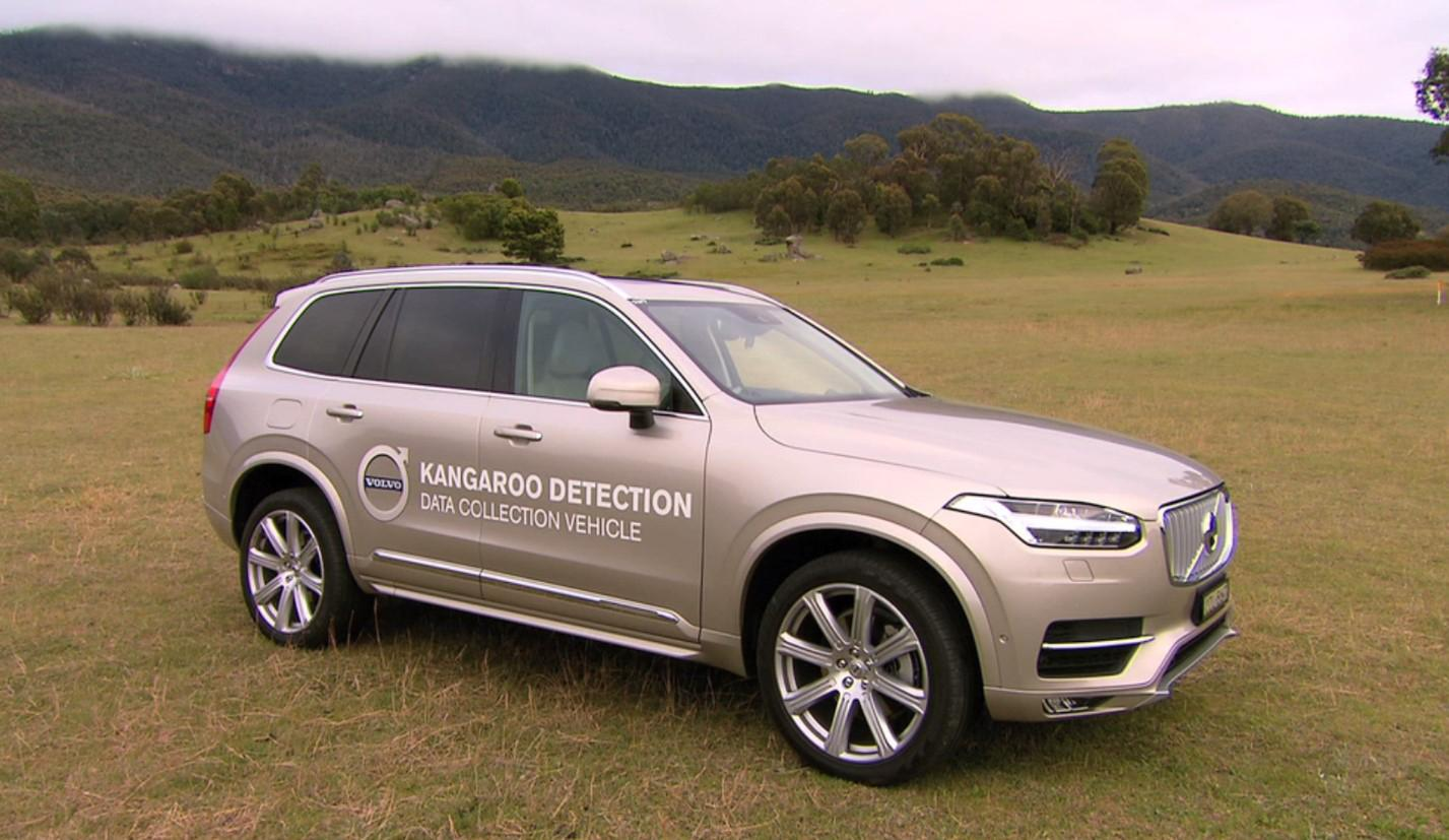 Volvo is working on technology for its vehicles that detects Kangaroos and brings the car to a gentle stop before a collision can occur