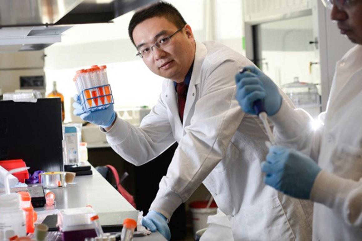 The smart patch was developed in the lab of Zhen Gu, PhD, assistant professor in the joint UNC/NC State department of biomedical engineering
