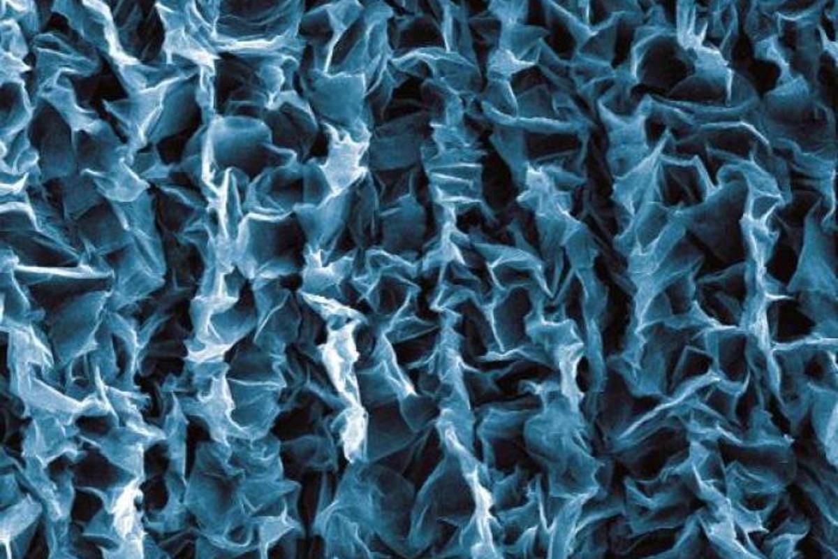Crumpled graphene layered on a flexible polymer (Photo: Duke University)