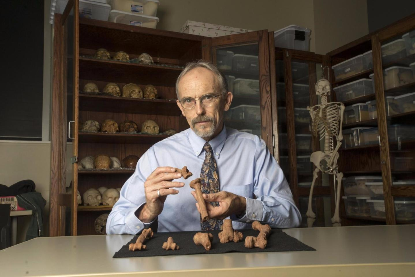 Kappelman believes 3D printouts of Lucy's skeleton will help other researchers test his theory that the breaks are consistent with a fall