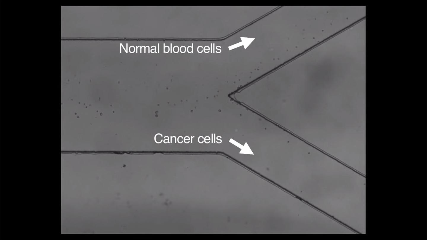 The new version of the method allows for gentle sorting of cells in patient blood samples (Image: MIT)