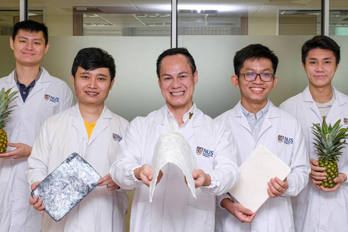 A research team at the National University of Singapore with a new aerogel made from upcycled pineapple leaves