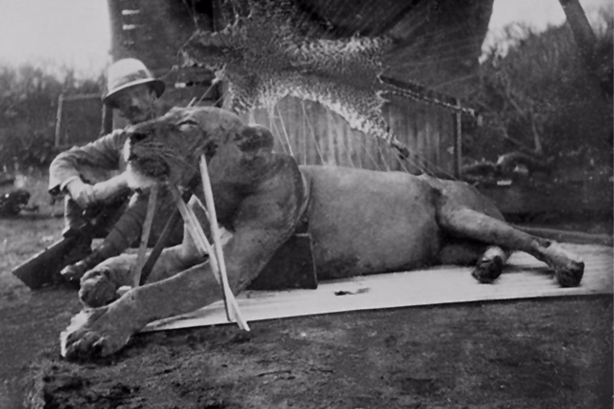 Colonel John Patterson, who shot the two Tsavo man-eaters and wrote a book about them, posing with one of the lions