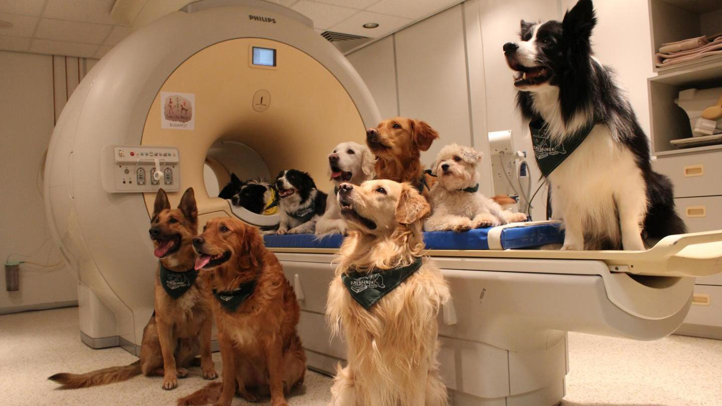 Using fMRI imaging, the researchers were able to confirm that dogs differentiate words, and understand the tone in which they're said