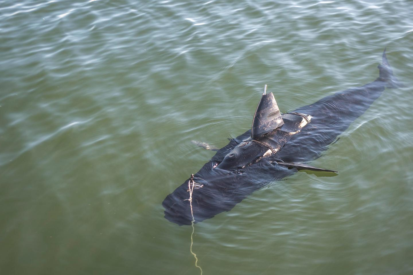 The GhostSwimmer cruises the waters of Virginia Beach