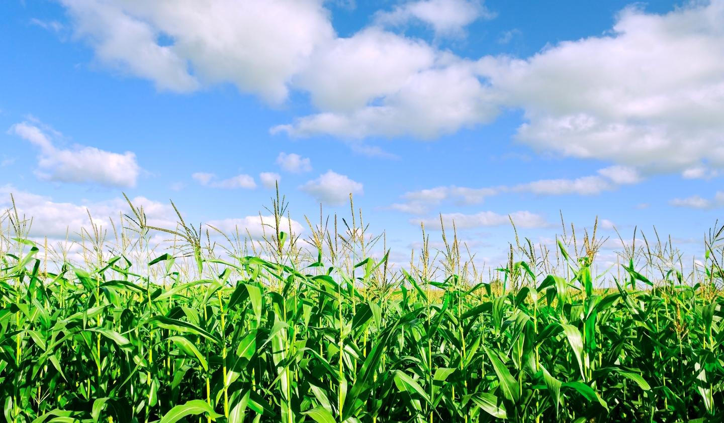 The system is being used to develop drought-resistant corn and other crops